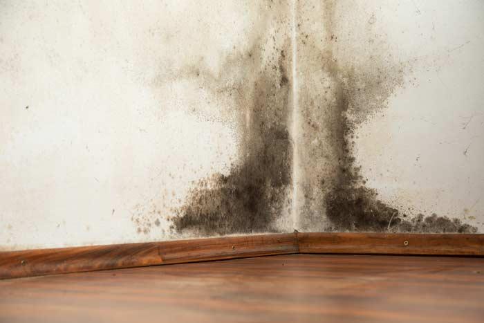 leaking shower repairs perth dampness in walls
